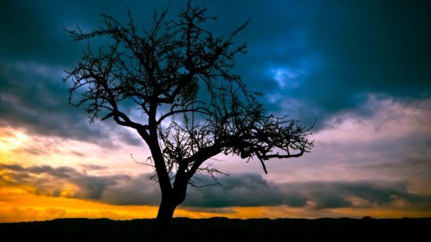 Informácia o plánovanom výrube stromov v DNV