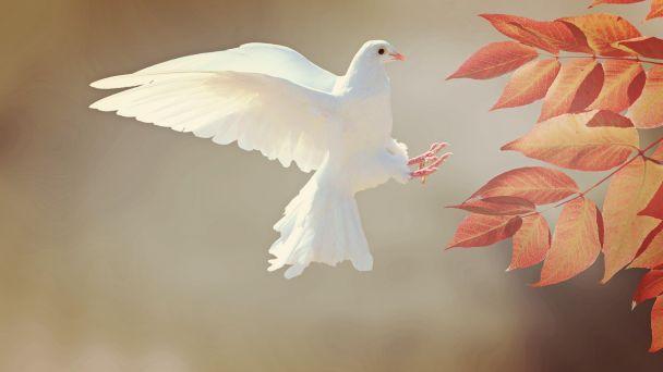 UDEĽOVANIE Devínskonovoveskej holubice 2021