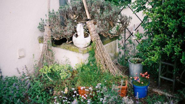 Liahniská komárov na záhradke či balkóne